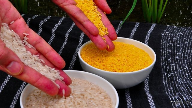 http://en.wikipedia.org/wiki/File:Golden_Rice.jpg