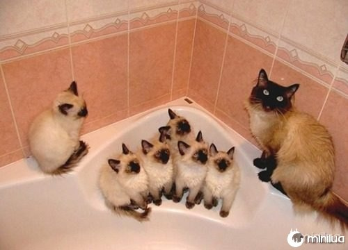 proud-cat-mommies-311__605