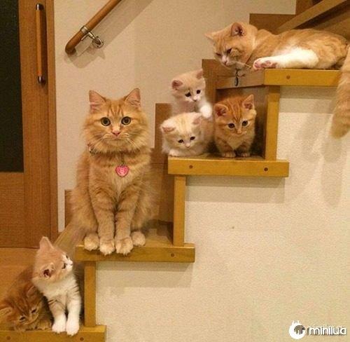 proud-cat-mommies-46__605