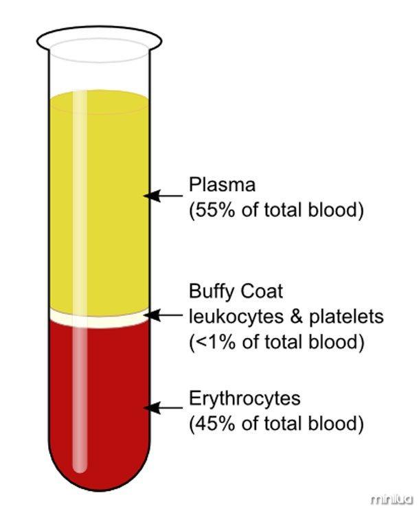 Unit of blood