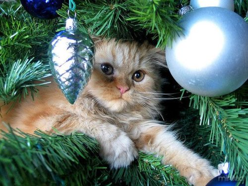 Albero di Natale gatto-anteprima-600x450-822632