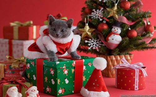 adorable-christmas-cat-wallpapers-1680x1050