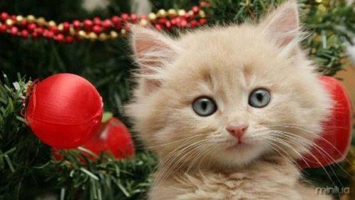 cat-christmas-tree.jpg.653x0_q80_crop-smart