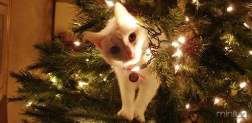 how-keep-your-pet-safe-christmas