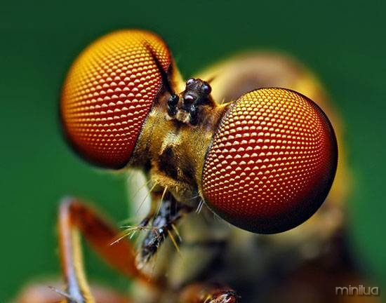 03-robber-fly.jpg.644x0_q70_crop-smart
