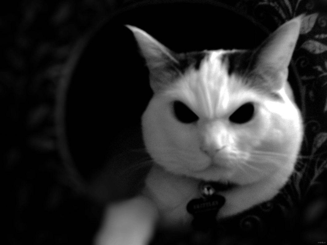 23678-cat-evil-skittles