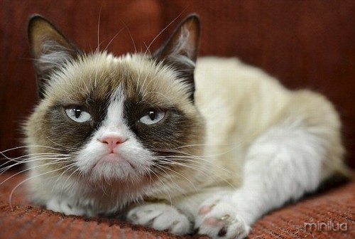 102756-blog-grumpy