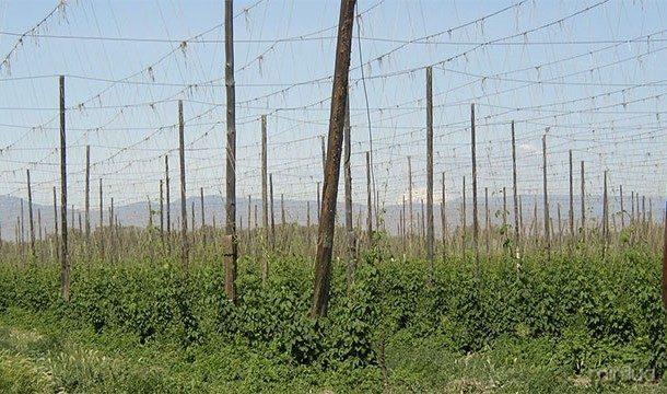 Há historiadores que acreditam que os seres humanos desenvolveram a agricultura, principalmente para produzir mais álcool