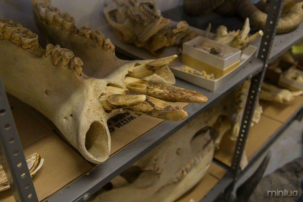 DNA é utilizado em medicina forense da vida selvagem para identificar espécies ameaçadas e as pessoas que os (caçadores) Hunt.