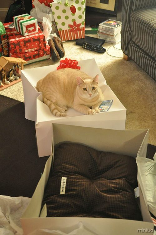 funny-gifts-for-cats-logic-34__605
