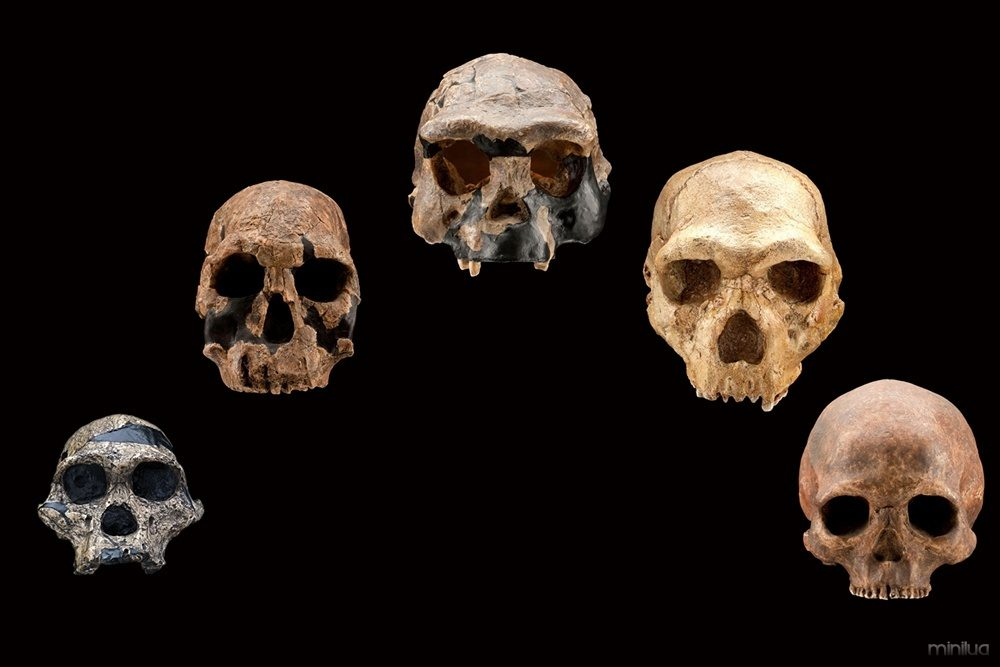 s2s-6-human-evolution