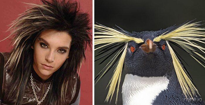 Bill Kaulitz Looks Like The Southern Rockhopper Penguin