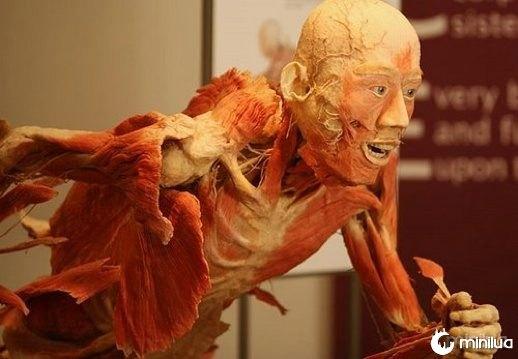 corpo humano_14