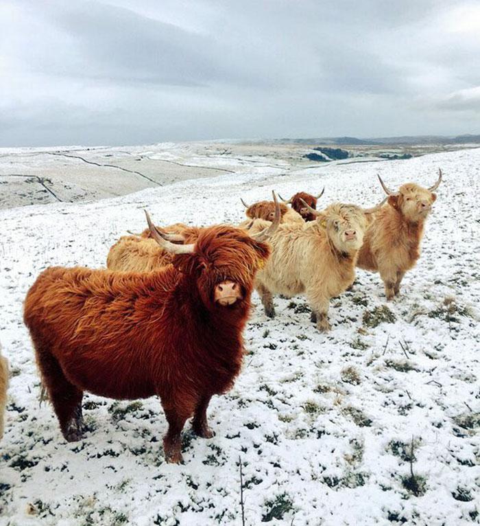 Estas vacas olham como estão para cair o álbum o mais quente da rocha do Indie do ano