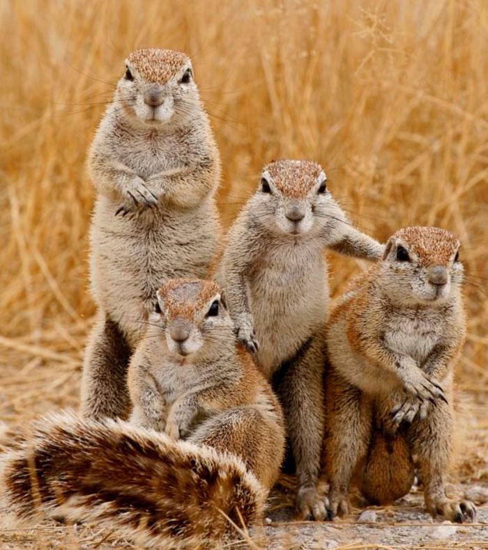 Os esquilos do hard rock