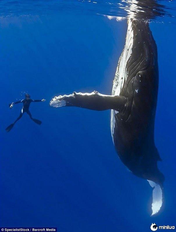 Mergulhador-alto-cinco-perfeito-timing