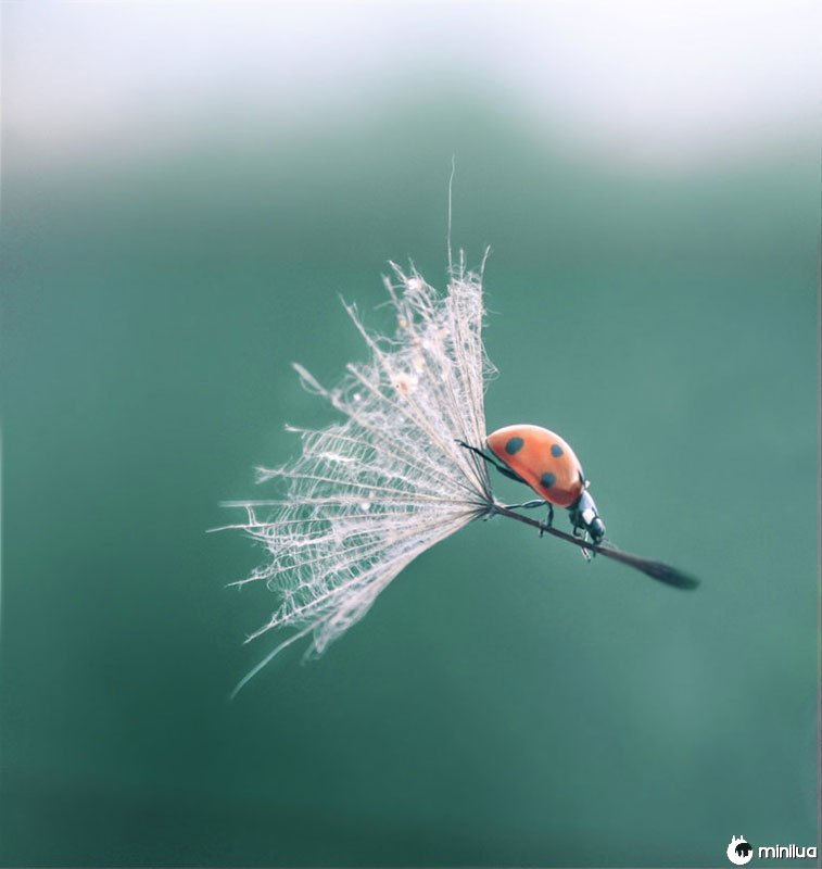 Ladybug-dandelion-perfeito-timing