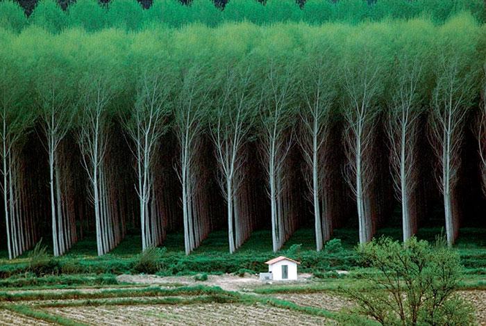 Floresta Perfeita