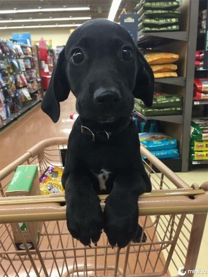 Hora de ir comprar!