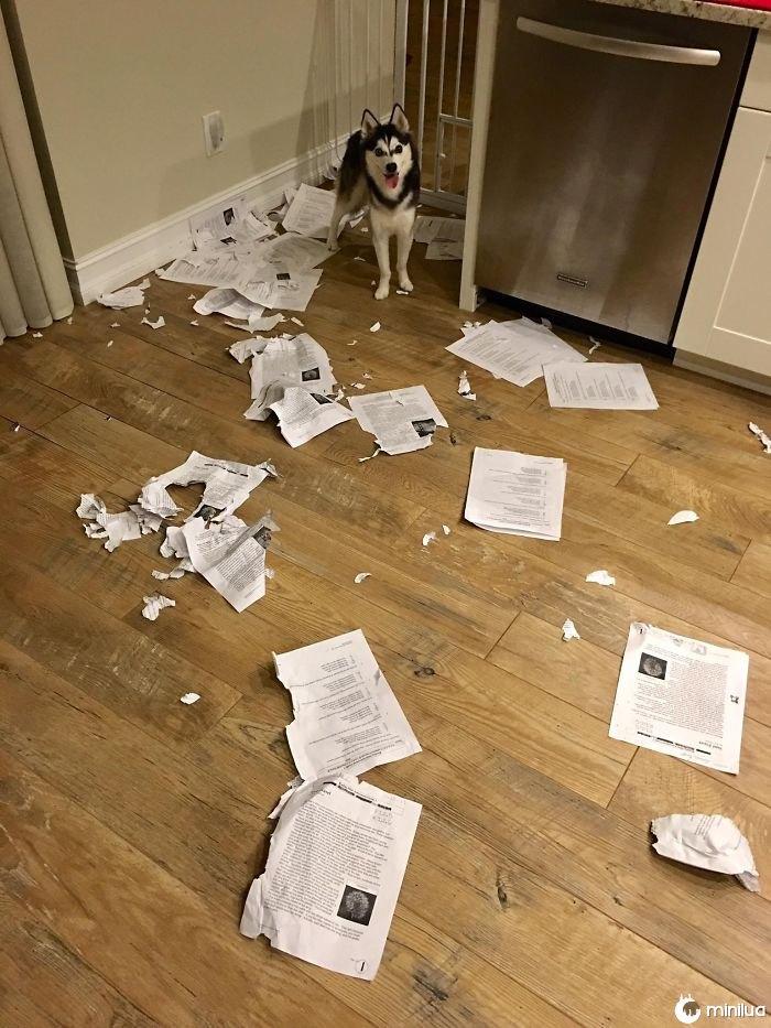 A classe pesarosa, meu cão comeu todos trabalhos de casa