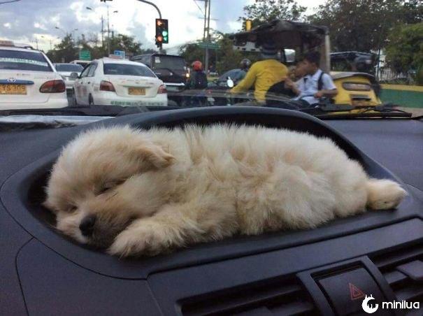 O carro com um suporte do filhote de cachorro