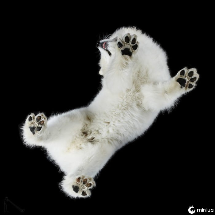 cão branco macio visto abaixo
