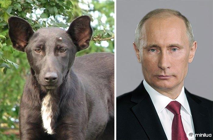 O cão olha como Putin