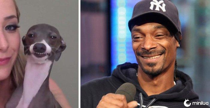 Este cão olha como Snoop Dogg