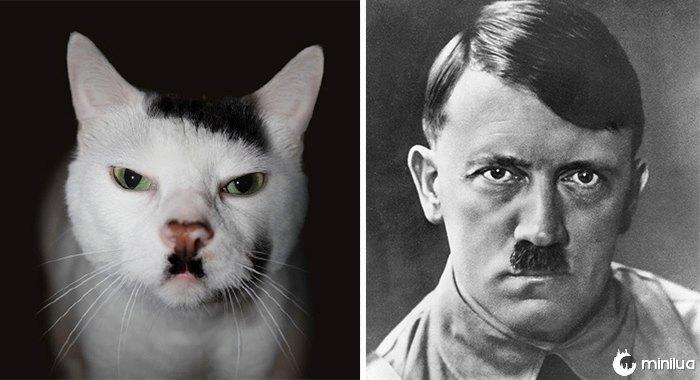 Snowball o gato de Kitler