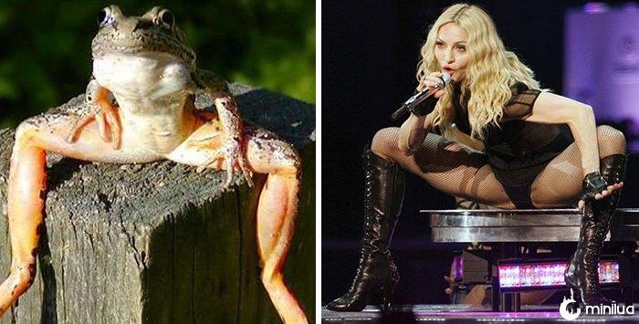 Este sapo olha como Madonna