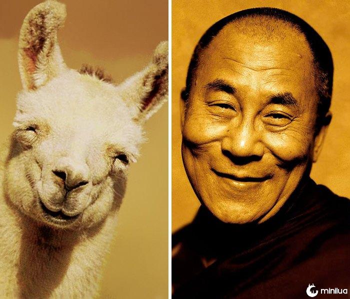 O lama feliz olha como Dalai Lama feliz