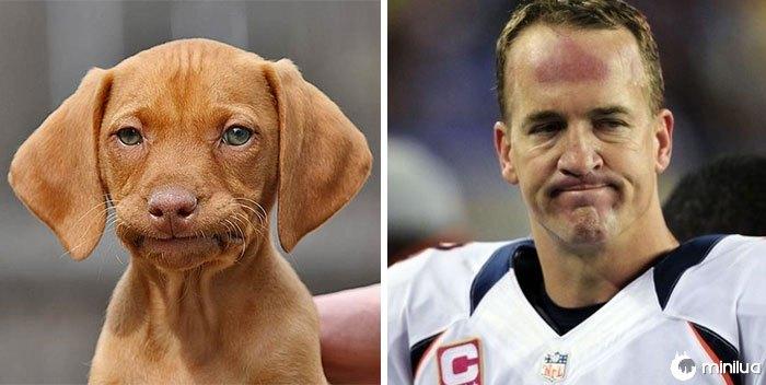 O cão triste olha como Peyton Manning