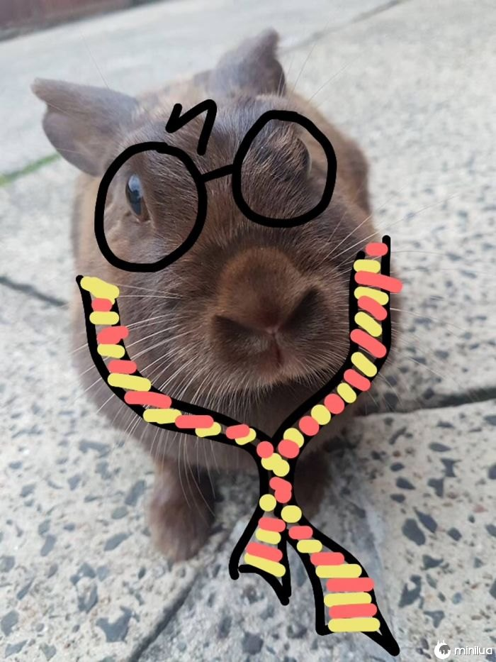 Harry Hopper. This Is Just A Rogue Bunny We Have That Visits Us Daily