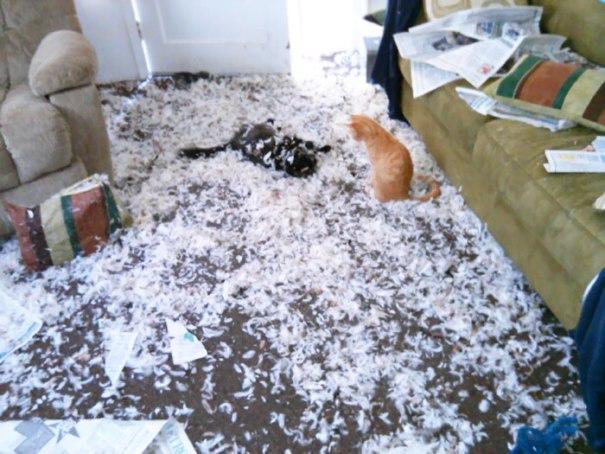 """Minha mamã emitiu-me um texto que diz, """"assim ... esta é minha sala de visitas."""" Um de seus cães obteve Ahold de um de seus travesseiros novos. Estes são apenas os gatos que rolam ao redor como Assholes"""