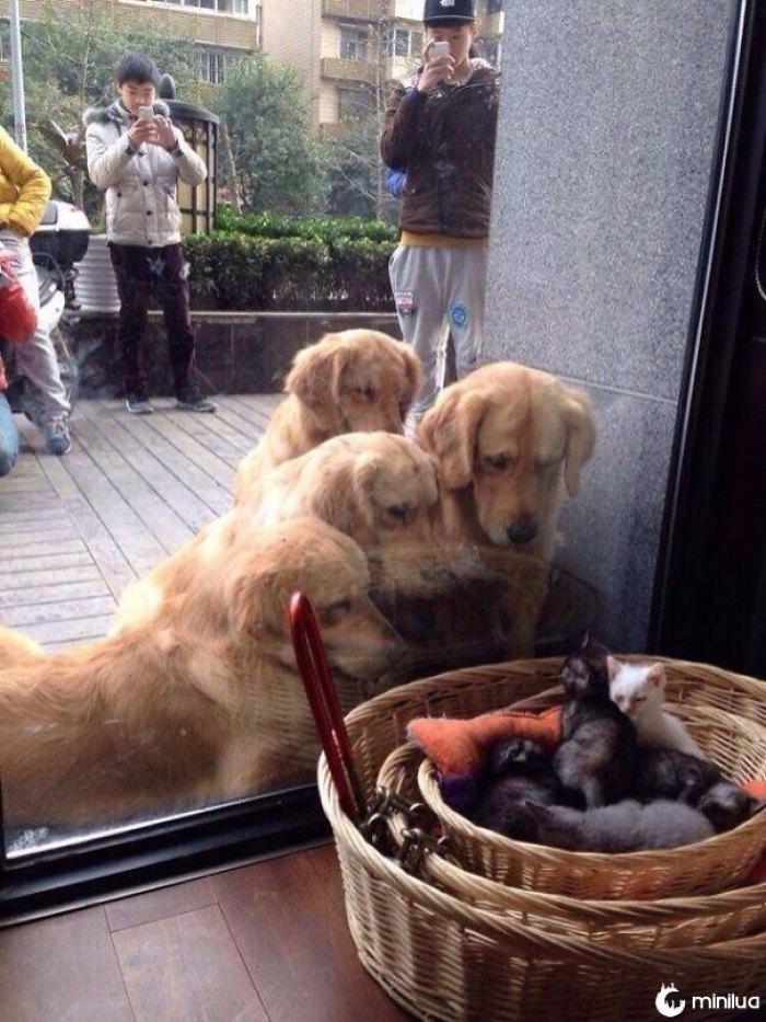 Primeira reunião com Kitties