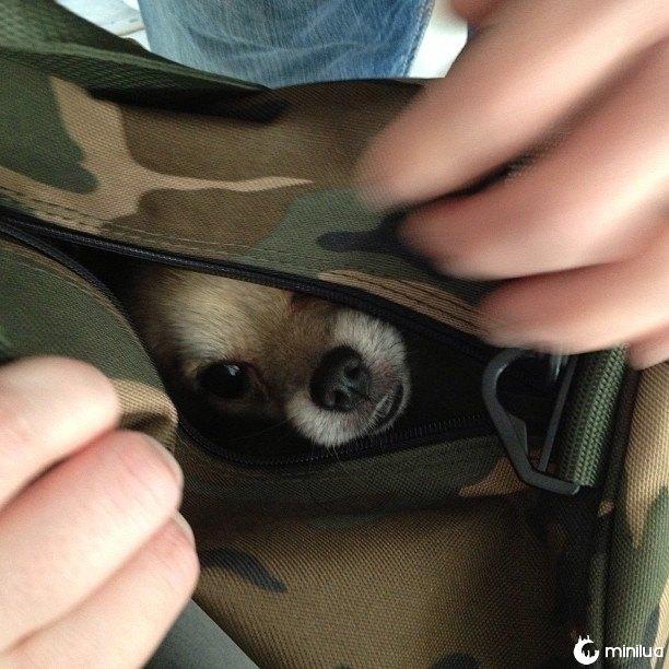 cão escondido no fanny
