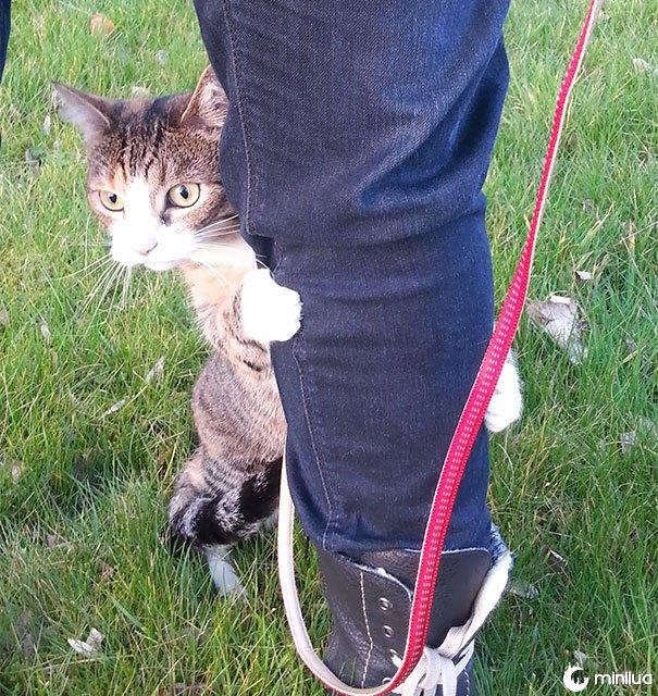 Começando nosso gato levantado do apartamento usado ao mundo exterior ... assim assustador!