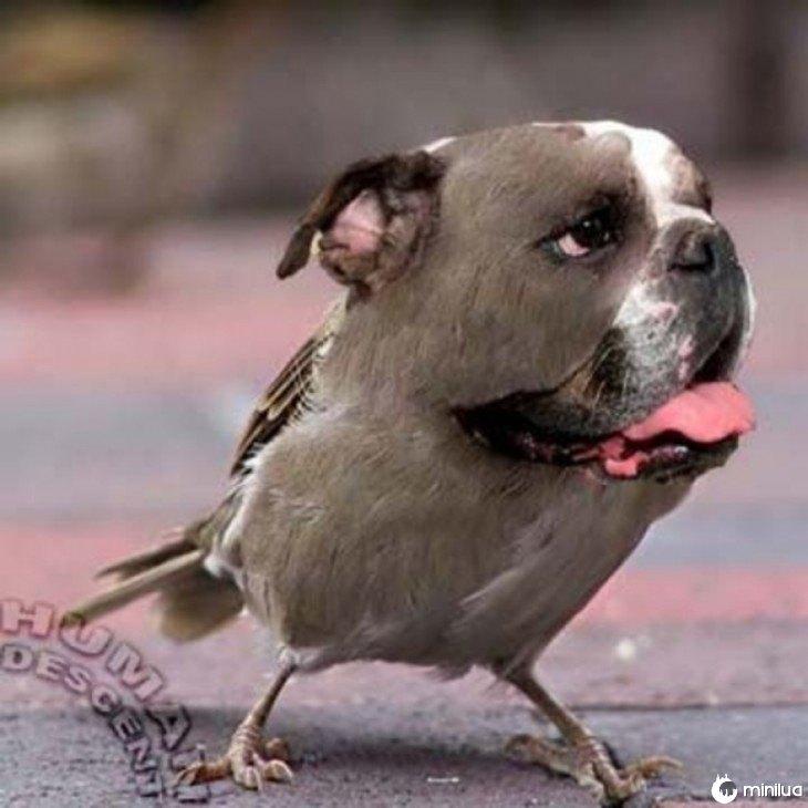 pássaros cães chefiadas