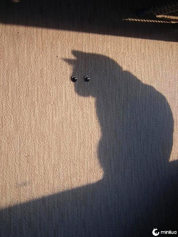 funny-perfectly-timed-cat-photo-6__605