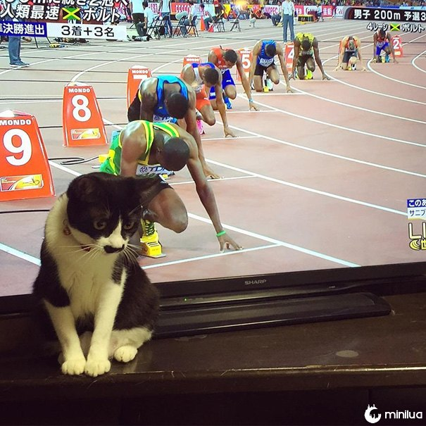funny-perfectly-timed-cat-photo-7__605