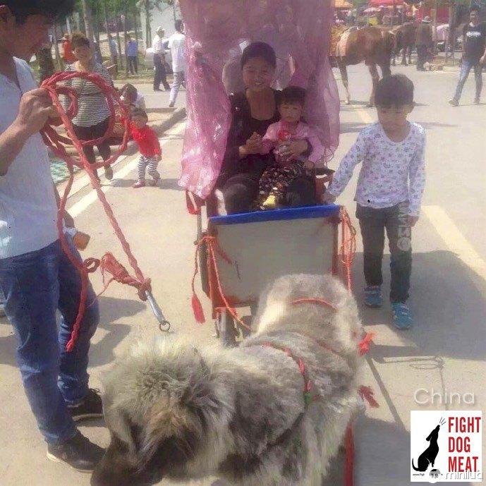 cão chinês empurrando um carrinho com os turistas para cima