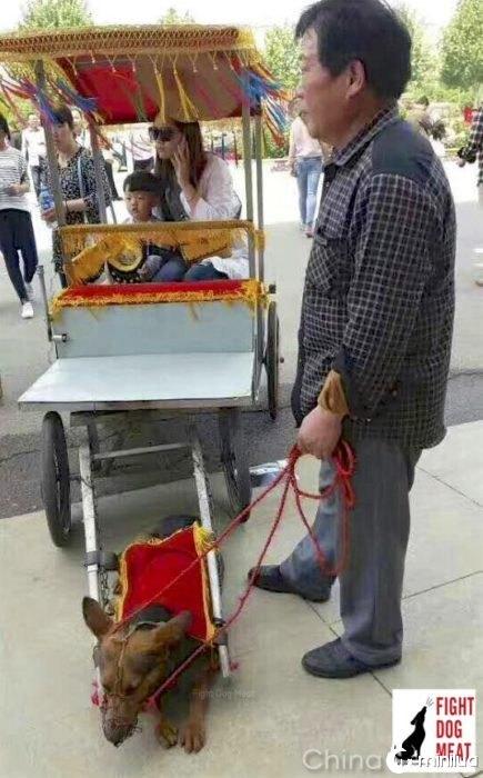 caminhão cão Chiquito empurrando turistas chineses