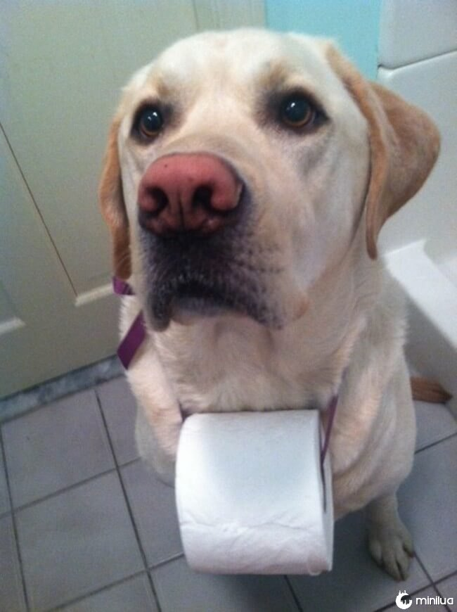 cachorro_banheiro14