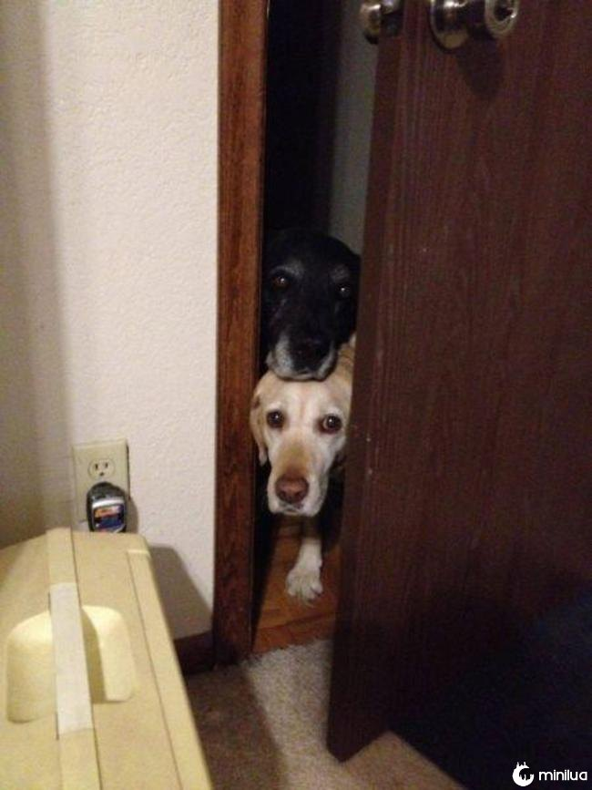 cachorro_banheiro2