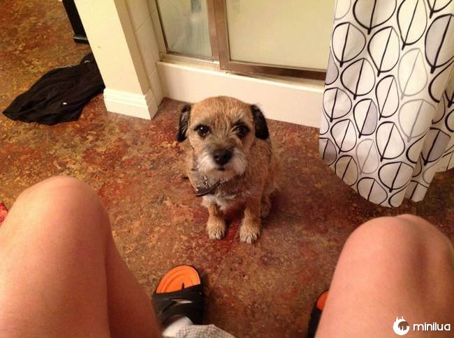 cachorro_banheiro7