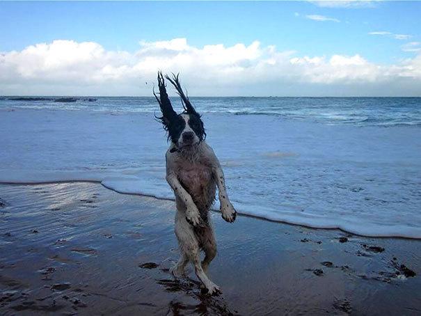 Imágenes de perros tomadas en el justo momento