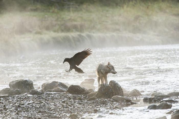 Natação-mar-lobos-pacífico-costa-canada-ian-mcallister-1