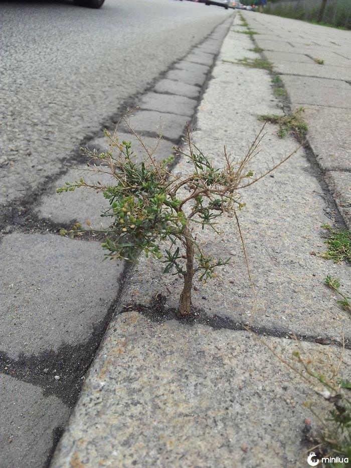 A Little Tree On The Sidewalk