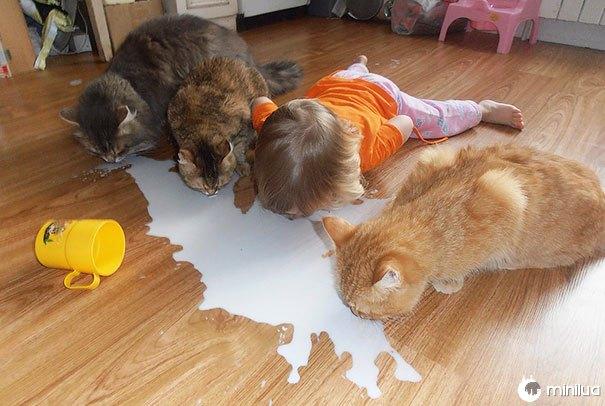 4 Cats Drinking Milk