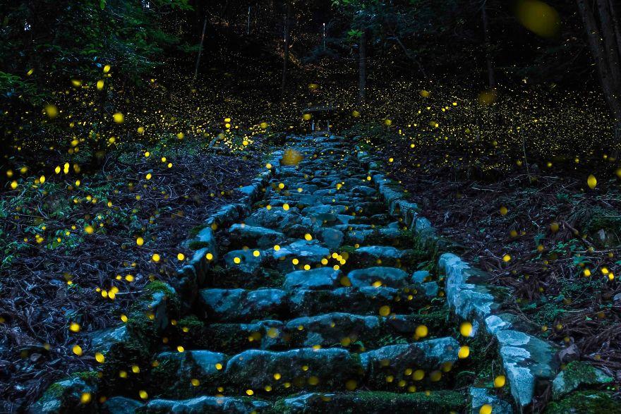 Menção Honrosa, Natureza: Floresta da Fada, Tamba, Japão